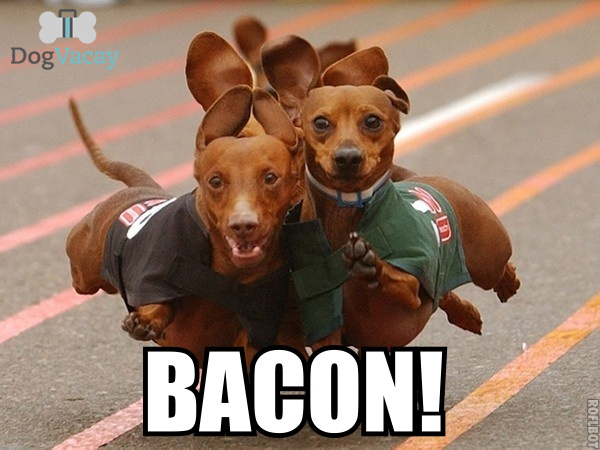 Bacon-Meme (2)