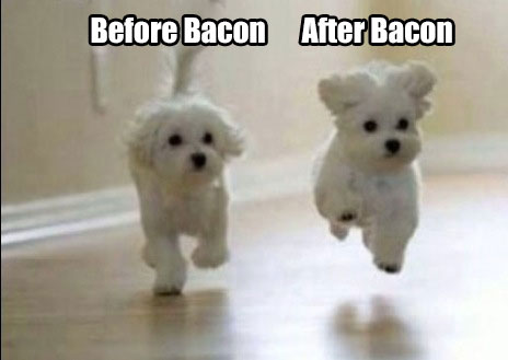 before after Bacon Dogs meme
